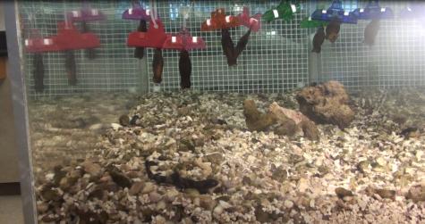 Marine Biology Raises Baby Sharks